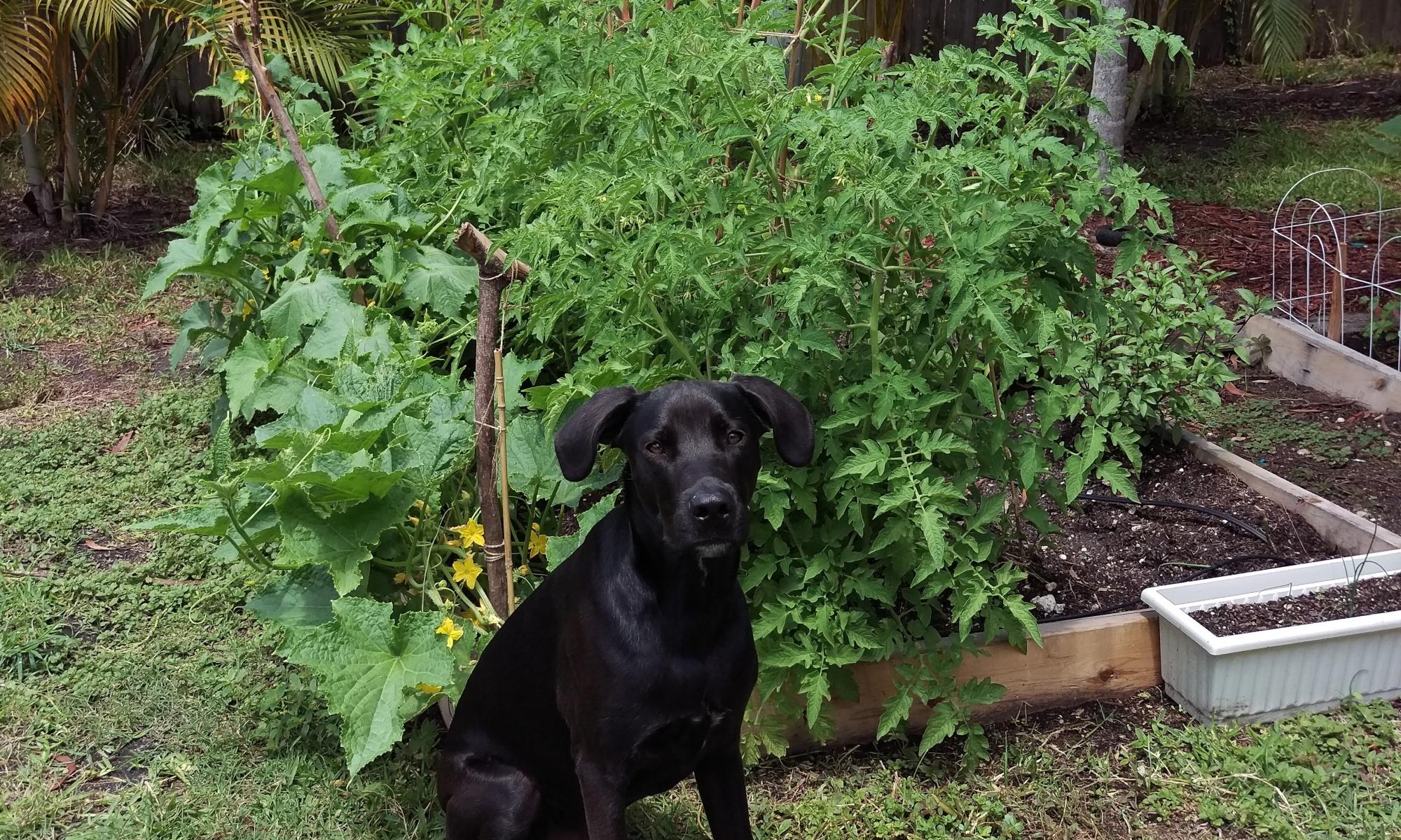 Kai and the Garden